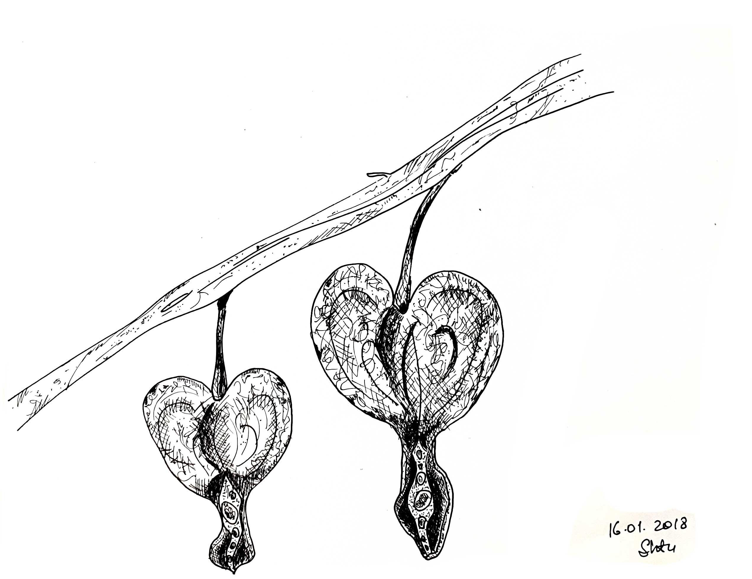 HeartLeaves